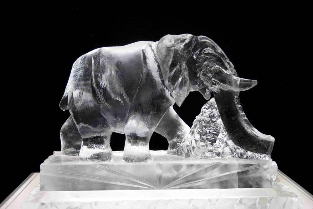 Elephant Luge LR